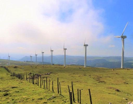 Genug Wind für einen grossen Windpark