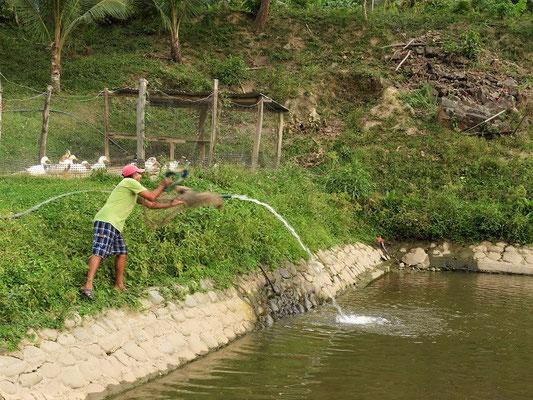....und ihr Mann - beim Fischen der Tilapia aus dem eigenen Becken