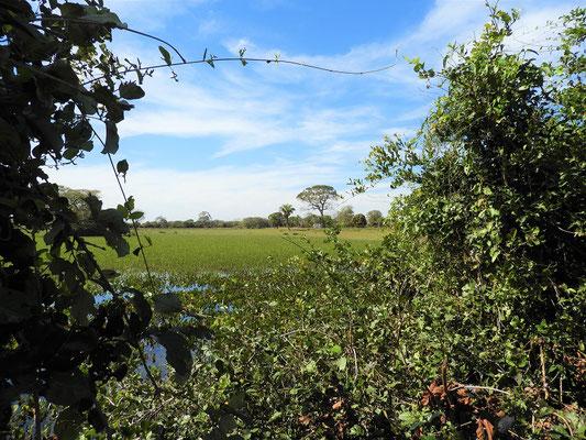 Jagdgebiet der Kaimane mit unserem Camper im Hintergrund