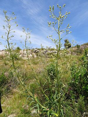 Falsa Carda - Auf Wanderung zum Cerro Bahía Blanca