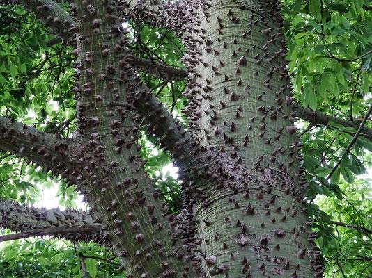 Auf diesem Baum sitzen bestimmt keine Affen - Autsch!! ;o))