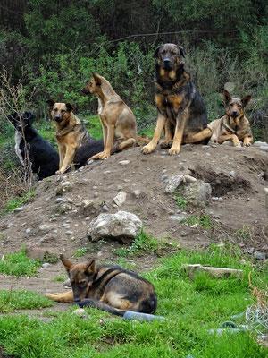 Um den vielen streunenden Hunden Einhalt zu gebieten....