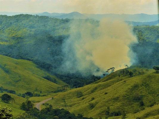 An vielen Stellen wird Wald gerodet und abgebrannt....