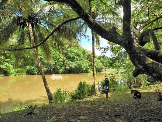 Entlang dem Río Sapoá und in Begleitung von Simba....