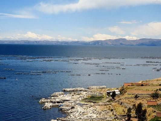 Fischzucht im Titicacasee
