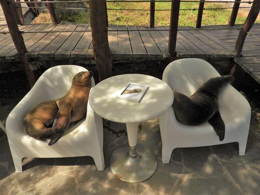 Dieses Restaurant reserviert auch Tische für die etwas anderen Gäste ;o))