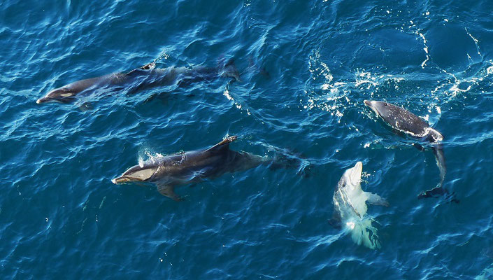 Delphine verkürzen uns die Wartezeit