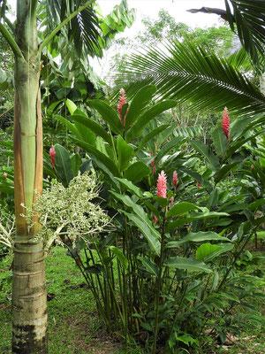 ....sowie viele exotische Pflanzen im grossen Garten
