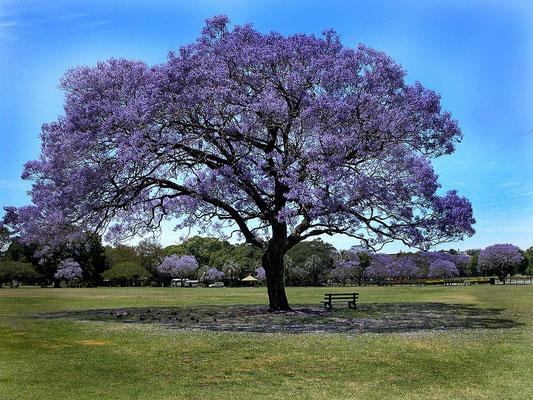 .... so wird Röbäs Baum irgendwann auch aussehen