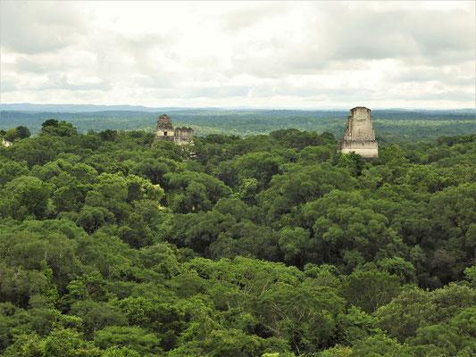 Der Nationalpark Tikal und sein Urwald reichen bis zum Horizont