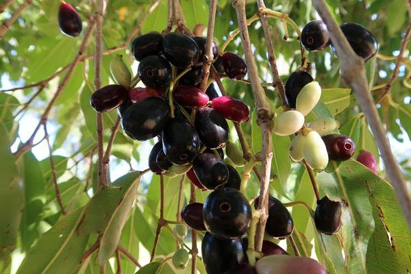 Eine Mischung zwischen Trauben und Kirschen