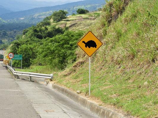 ....Schildkröten :o)  Leider nie eines dieser Tiere zu Gesicht bekommen!