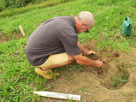 Wir pflanzen einen Baum und helfen die Mata Atlantica wieder aufzuforsten