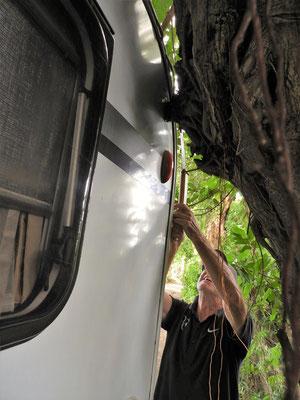 ....unseren Camper vom Baum zu befreien