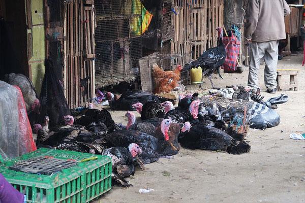 Truthahn-Markt in Trujillo