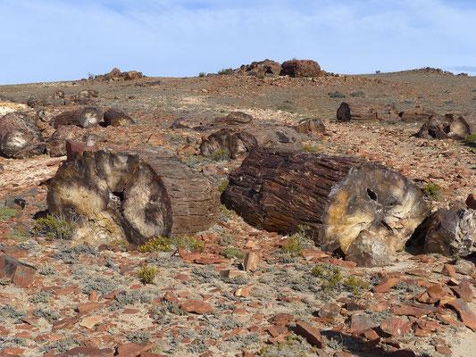 Baumstämme 150 Millionen Jahre alt