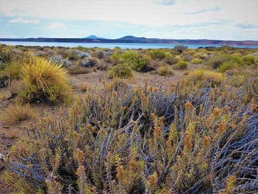 Die Flora in diesem Gebiet - trockene Gräser und Sukulenten