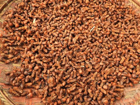 ....frittierte Ameisen - sind knusprig und schmecken nach nichts....