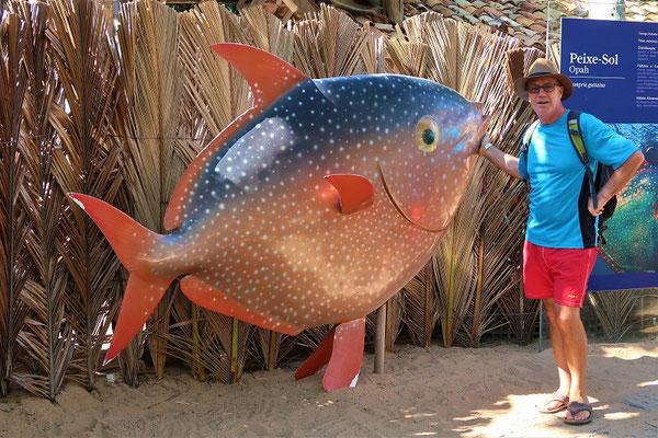 Diesem Fisch könnte man - zwar eher selten - aber in dieser Grösse im Meer begegnen