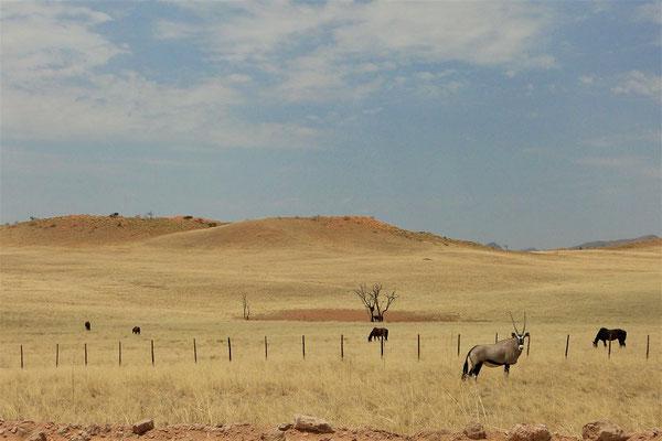 Die Fahrt geht durch die wüsten-ähnliche Landschaft weiter nach....