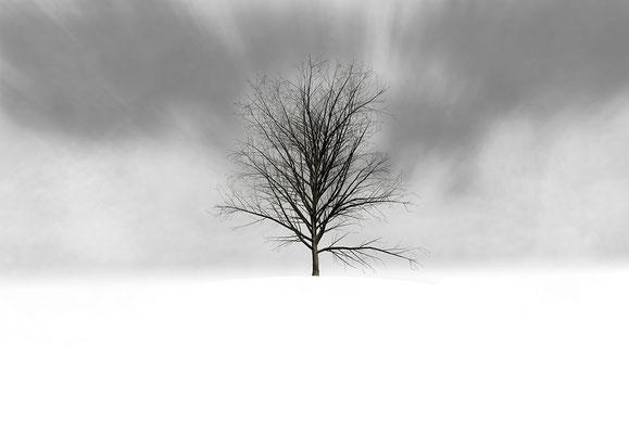 Macula Tree I