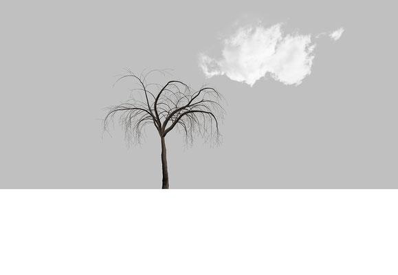 Macula Tree III