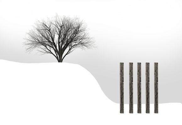 Macula Tree II