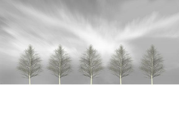 Macula Tree IV to V