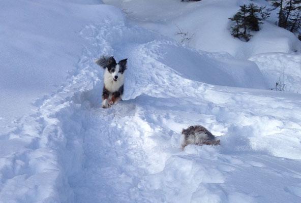 Auch im Schnee kann man tauchen