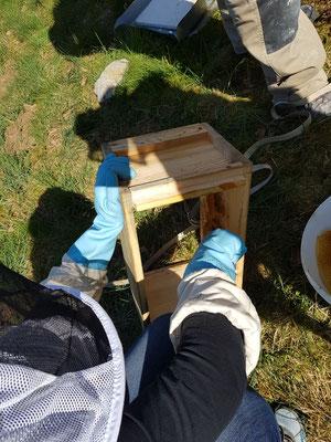 auch die Ablegerzargen/halben Honigräume sauber machen