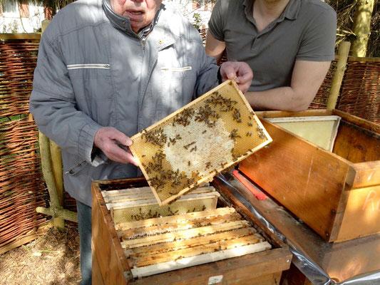 erste Honigwaben Futterwarben