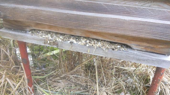 Maus in Bienenbeute