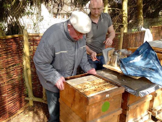 Bienenschwarm Durchschau