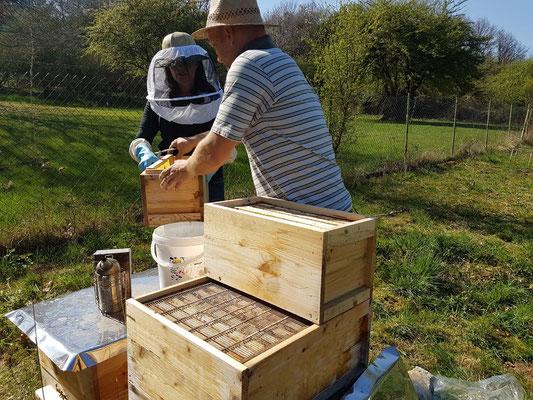 halbe Honigräume aufsetzen