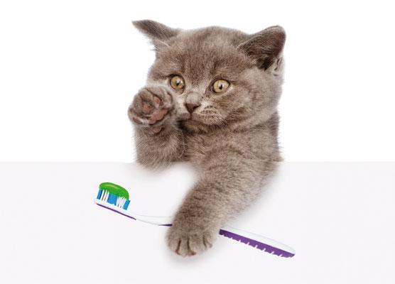 Recallpostkarte Zahnarztpraxis Katze lustig Terminerinnerung nexilis