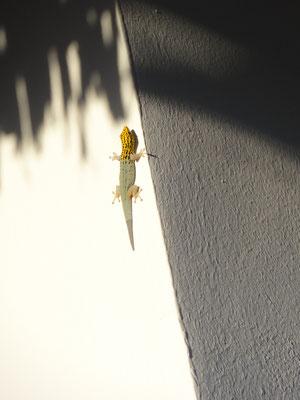 un joli gecko