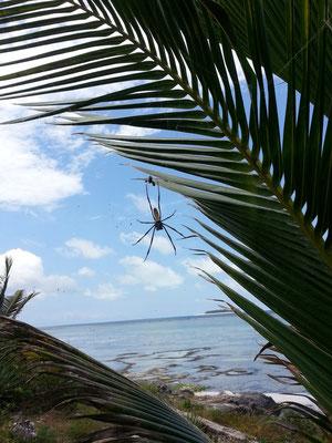 une place au soleil pour Mme l'araignée
