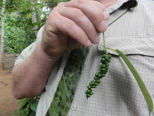 Steph avec sa belle cravatte tient du poivre