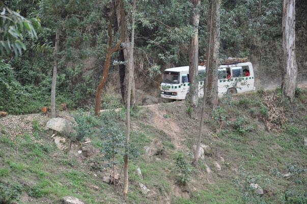 un bus dans la forêt clairsemée