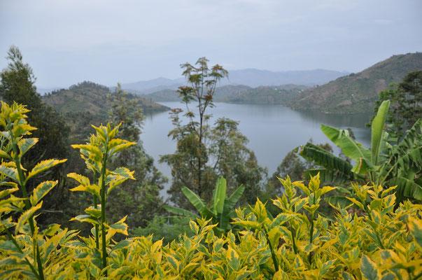 Au loin le magnifique Kivu