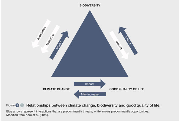 """Quelle: IPBES, 10.6.2021, """"Biodiversity and Climate Change"""" (PDF)"""
