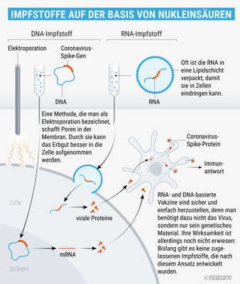 "Quelle: Spektrum.de, 7.5.2020, ""Covid-19: 8 Wege zum Corona-Impfstoff"""