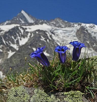 Lenzspitze & Nadelhorn mit Hohbalmgletscher