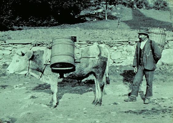 Saum mit Weintrauben (Quelle: ? Stebler, 1921)