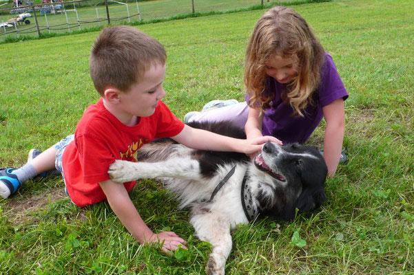 Massage für Fotografen-Hund