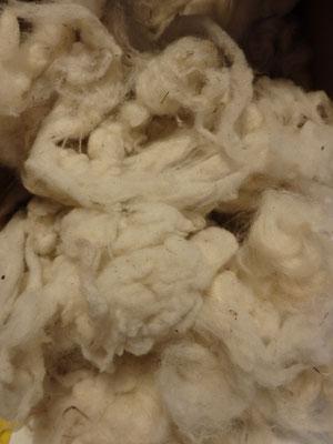 Laine de mouton propre