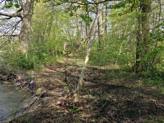 natürlicher Tollingbereich ohne Netz vor dem Wasser