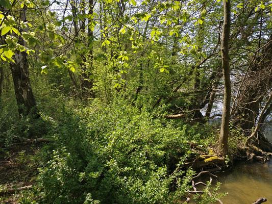 Suchengebiet mit seitlichem Wasserstreifen