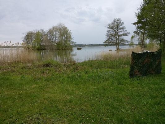 Insel vom Blind, rechts bei dem einzeln stehenden Baum ist die Landzunge für die Doppelmarkierung (60m)