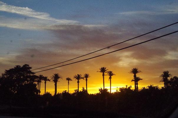 パームツリーと夕日